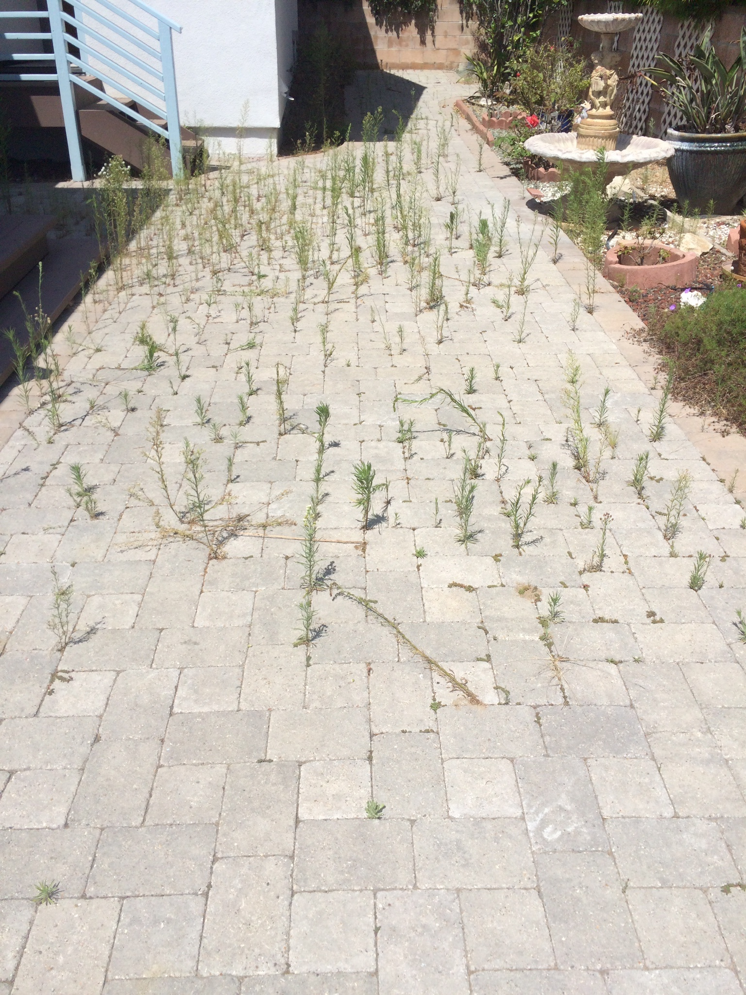 how_to_remove_weeds_from_paver_joints.jpg
